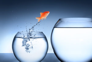 goldfish jumping from small fishw bowl to large fish bowl.