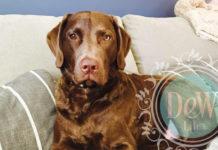 the author's brown dog faithful through change